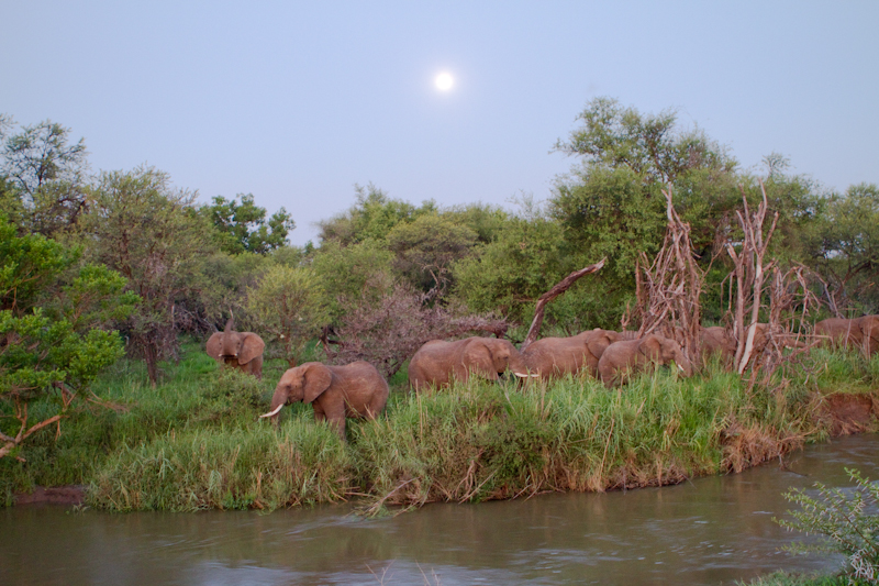 A herd of elephants emerge like ghosts next to a small stream