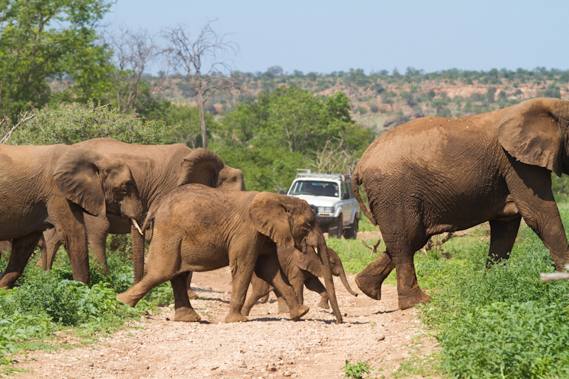 Elephants are often encountered in the wilder western section of Mapungubwe.