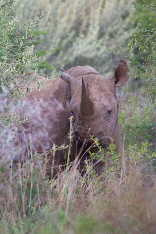 Look out for black rhinos in the north-eastern thickets of the park.