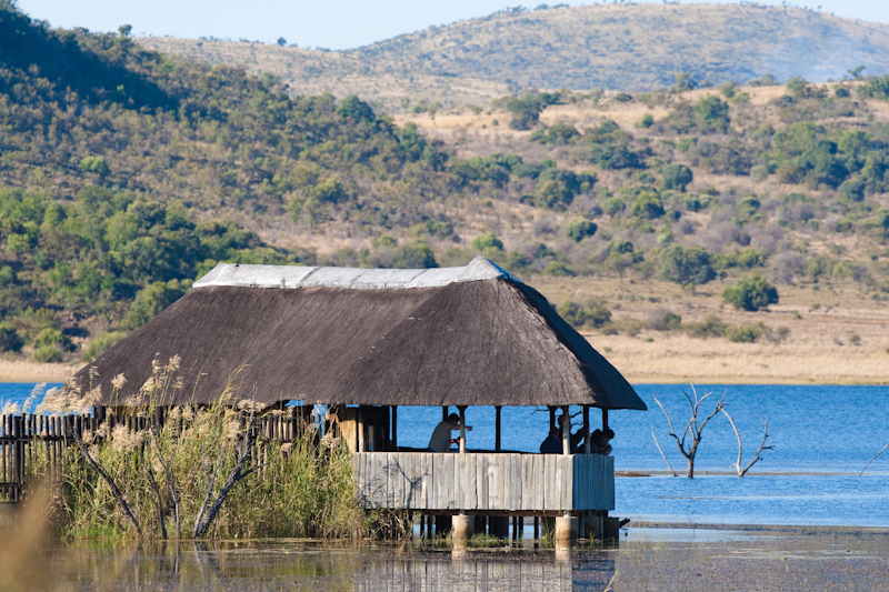 Mankwe Dam hide can become very crowded on weekends, but is still worth visiting.