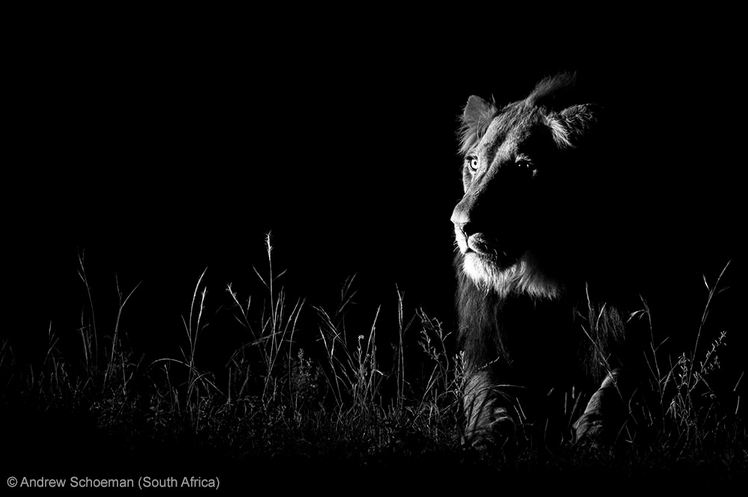 NATURE IN BLACK AND WHITE - RUNNER-UP: 'Shot in the dark' by Andrew Schoeman