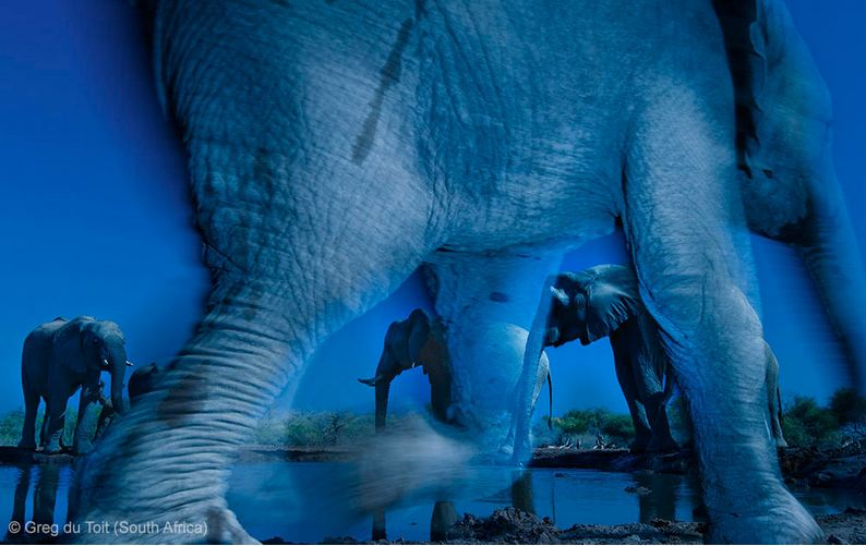 GRAND TITLE WINNER - ANIMAL PORTRAITS: 'Essence of elephants' by Greg du Toit