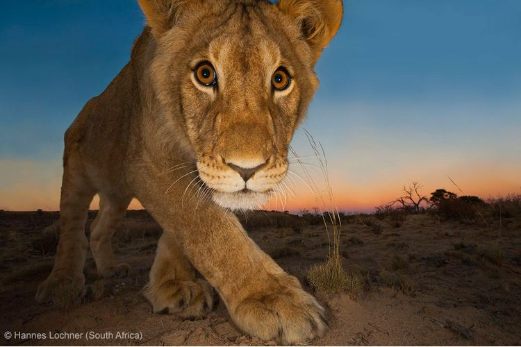 ANIMAL PORTRAITS - JOINT RUNNER-UP: 'Curiosity and the cat' by Hannes Lochner