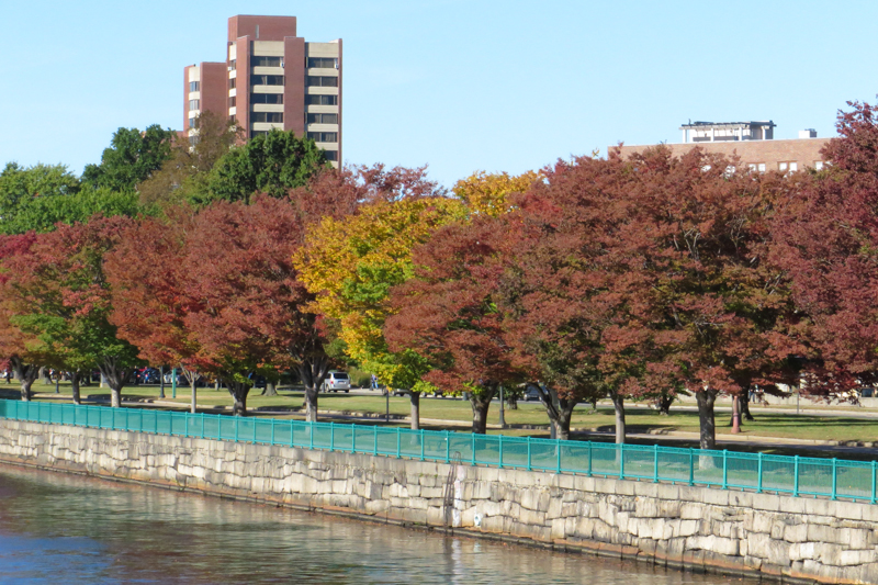 Colourful trees lining the Charles River in October.