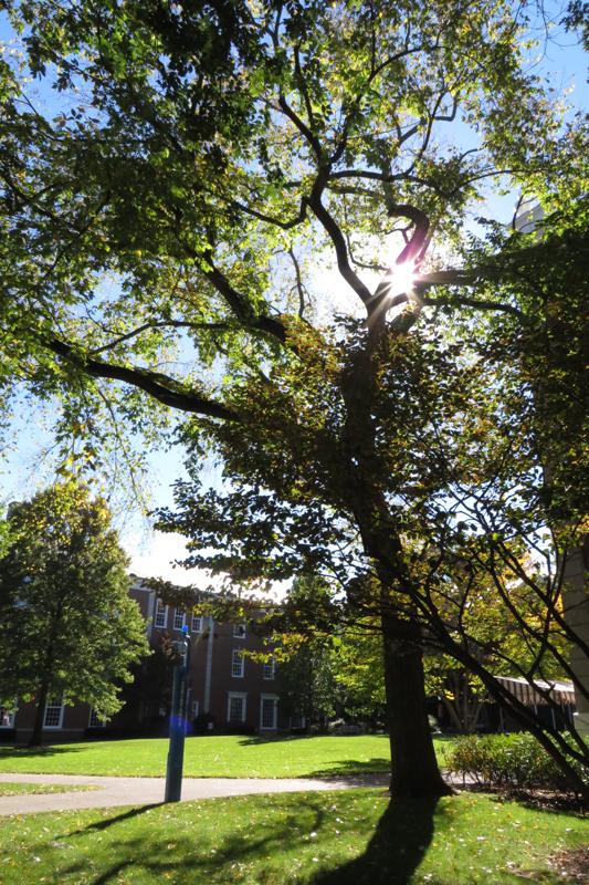 In many ways, Harvard Campus looks a lot like Stellenbosch.