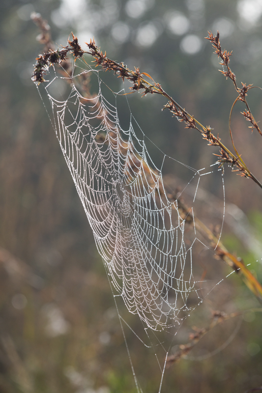 Take the time to photograph a few wet spider webs early in the morning.