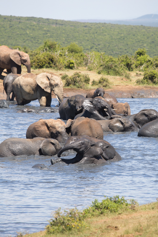Midday is bath time in Addo!