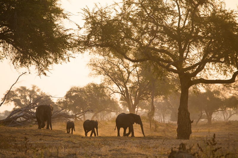 Elephants are common in the park, but are not as relaxed as in places like Kruger.