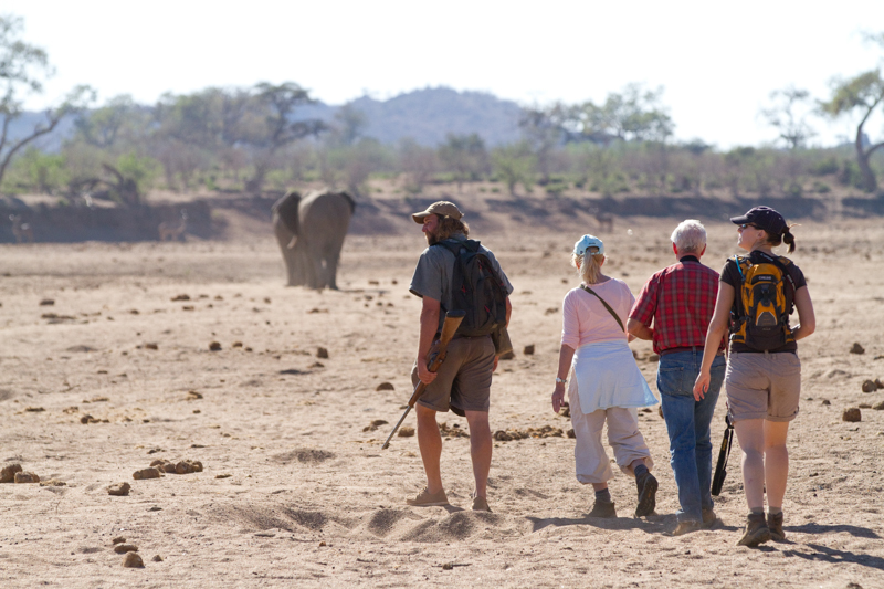 At Tuli Wilderness you can literally walk in the fresh footsteps of elephants.