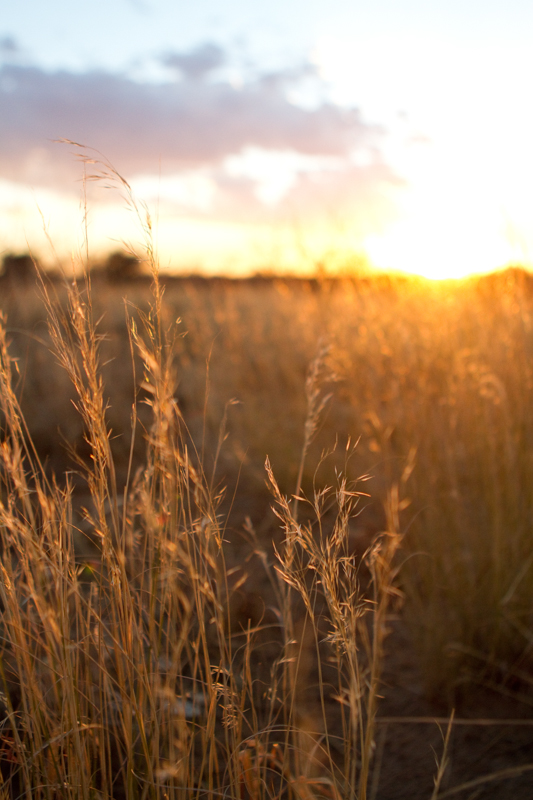 Golden grasses so typical of the reserve are best photographed at sunset.