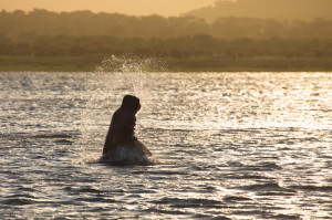 You'll be unlucky not to see hippos if you go on a sunset boat cruise.